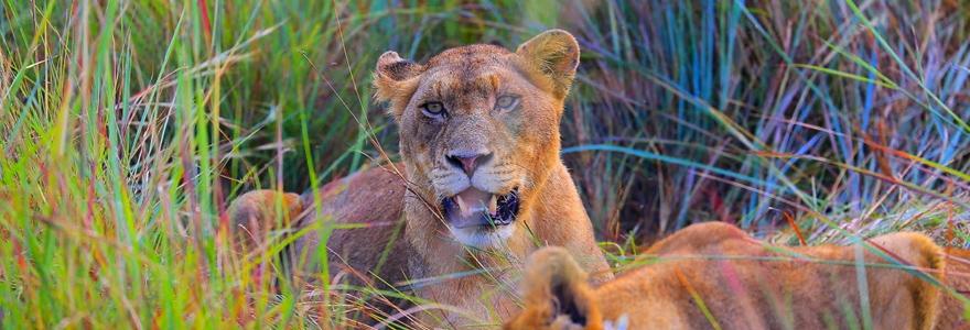 du Serengeti au lac Natron