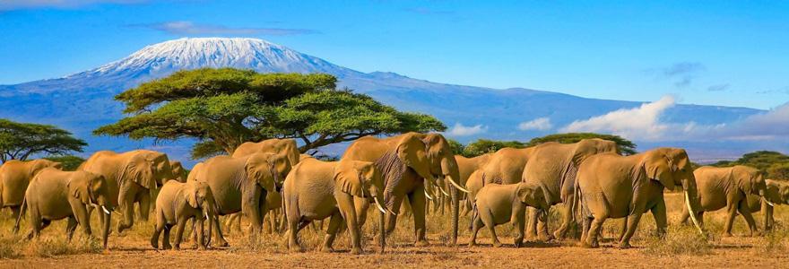 Aller en Tanzanie